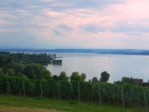 Bodenseewijnbouwrond