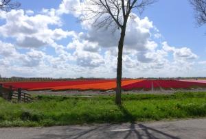 Tulpenronddezomerdijk