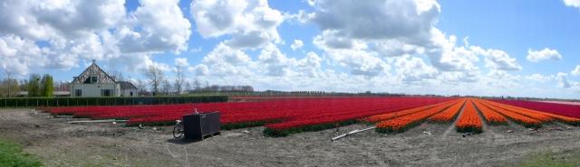 Tulpenronddezomerdijk2