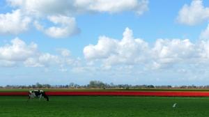 Tulpenronddezomerdijk4