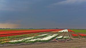 bollen in polder