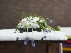 Keywords: Sneeuw;Winter